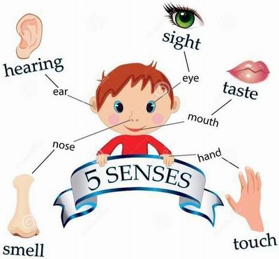 Чувства - Senses